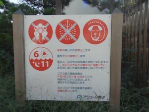 maiko-kaigan04