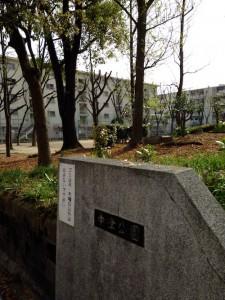 中津公園と市営住宅