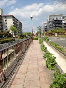 ファインシティ甲子園に近い公営住宅エリア(左手)