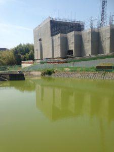マンションに隣接する池