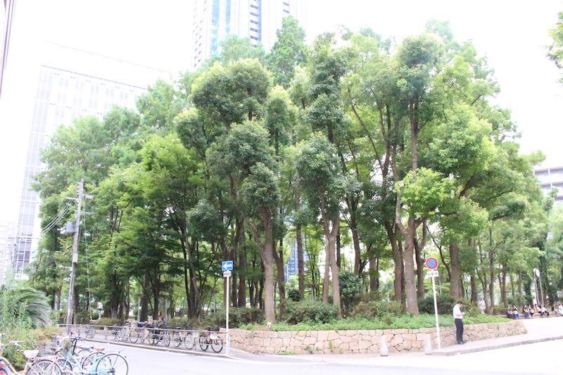 公園*「グランメゾン新梅田タワー」周辺